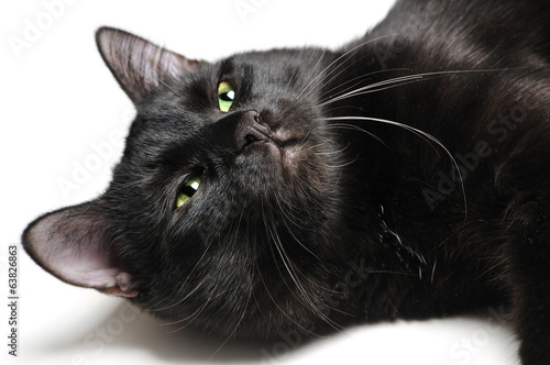 Head of a black cat lying on white background