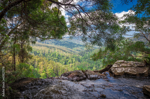 Foto op Canvas Heuvel Springbrook national park, Australia