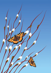 willow branches and butterflies