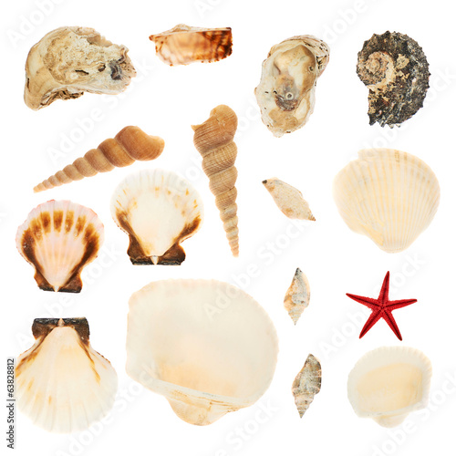 Set of multiple seashells isolated