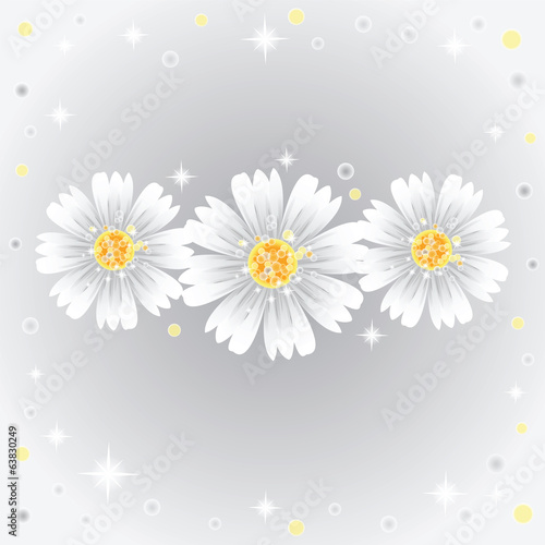 Three daisy flowers on gray background.