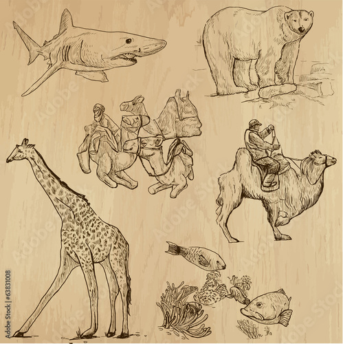 Animals around the World (set no. 16) - vector set, hand drawn