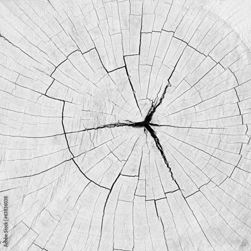 Dry old cracked tree stump texture