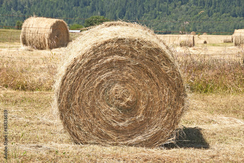 Large round grass hay bales in a summer field