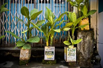 plante en conserve, rue d'Asie
