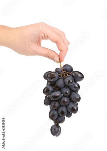 Hand holds one ripe grapes.