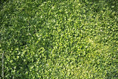 Texture di foglie verdi