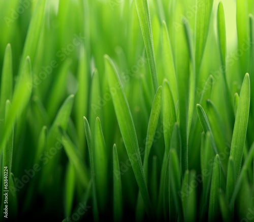 Fresh thick grass closeup