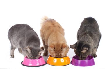 Drei Katzen sitzen am Futternapf