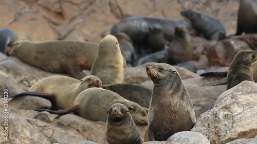 Sea Lions closeup