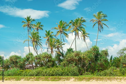 Coconut palms on the sandy shore