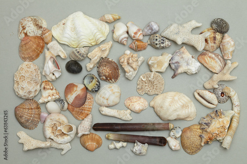 background made ​​of seashells