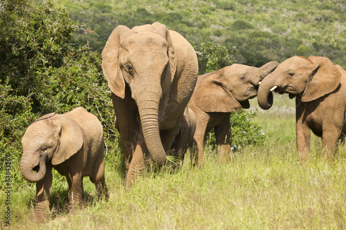 Elephant family fun