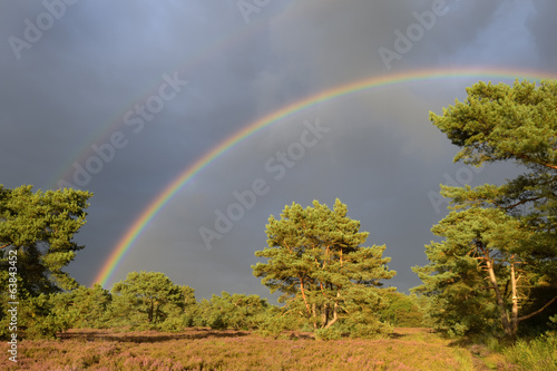 Landscape with heather (Calluna vulgaris) with two rainbows.