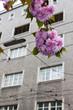 Blühender Baum und Mietshaus