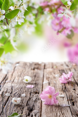 Spring blossoms background - 63844681