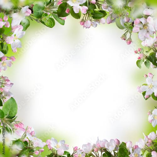 In de dag Bloemen Spring blossoms background