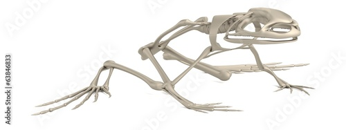 realistic 3d render of frog skeleton