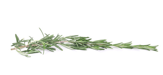 Rosemary isolated.
