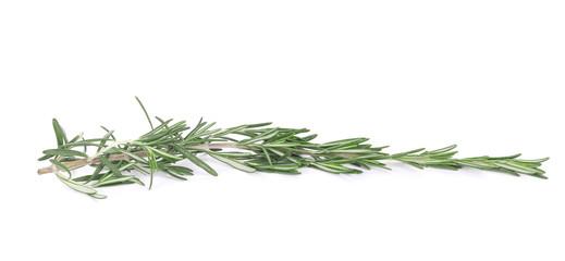 Rosemary isolated.
