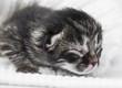 newborn kitten on a white background