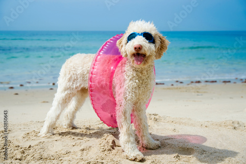canvas print picture Hund am Strand