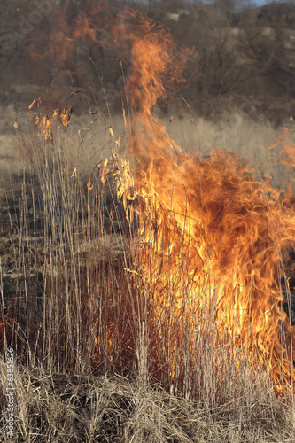 Spring. Burning dry grass