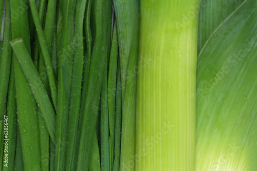 Green onion, close up