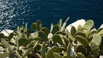 Agave cactus above sea