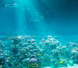 Sea or ocean underwater coral reef with shark