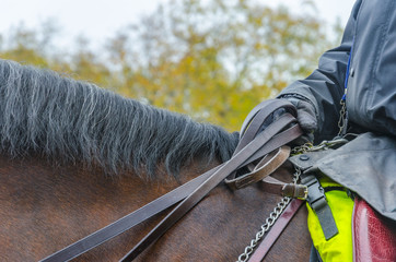 london police unit with detail of glove holding horse