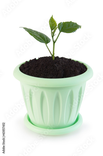 Little green sprout in a flowerpot over white background