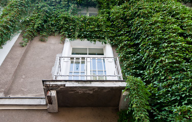ivy covered wall with balcony on old tenement house in Warsaw