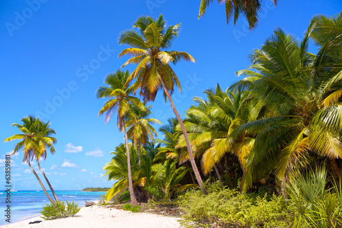 Tropical beach with palm trees in Caribbean Sea