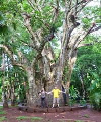 tourists at big baobab
