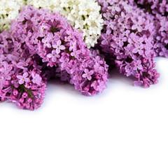Lilac isolation