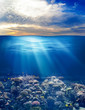 canvas print picture - sea or ocean underwater life with sunset sky