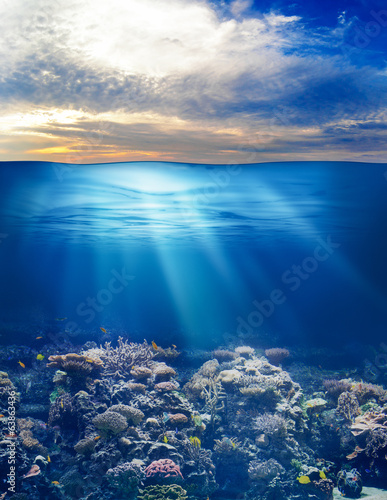 Staande foto Onder water sea or ocean underwater life with sunset sky