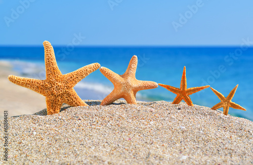 Starfishes on the beach - 63864451