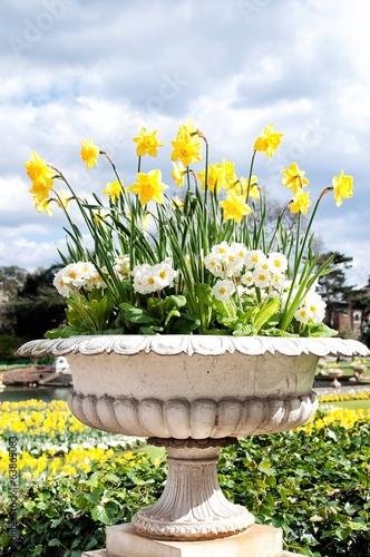 Stone pot of daffodils and primroses in the park