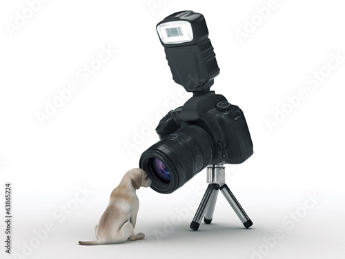 photo camera and dog