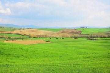 collina della Toscana- natura
