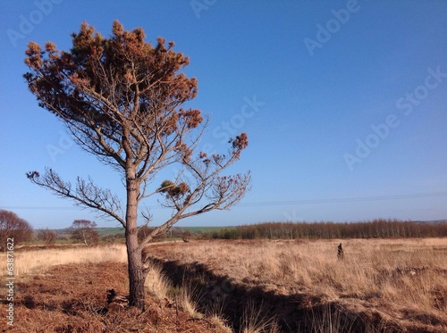 lone tree in bogland field