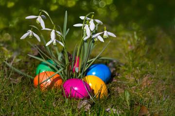 Farbige Eier, Schneeglöckchen & Bokeh