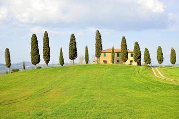 Cipressi- Toscana