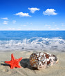 canvas print picture - Conch shell with starfish on beach