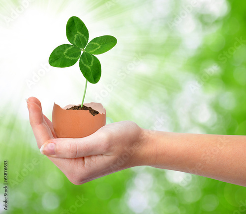 Hand holding clover growing out of the egg