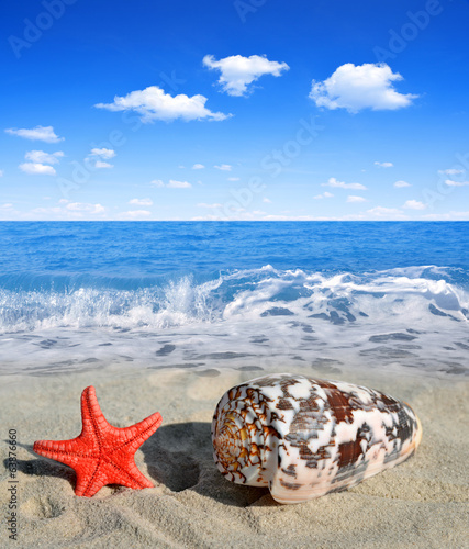 canvas print picture Conch shell with starfish on beach