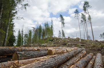 Logpile at a clear cut area