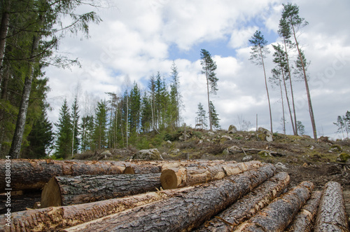 Logpile at a clear cut area